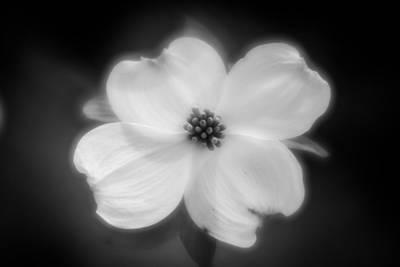 Photograph - Blossom-7-bw by Joye Ardyn Durham