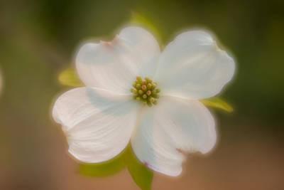 Photograph - Blossom-7 by Joye Ardyn Durham