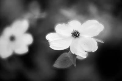 Photograph - Blossom-8-bw by Joye Ardyn Durham