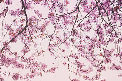 Photograph - Blossom Abstract by Kunal Mehra