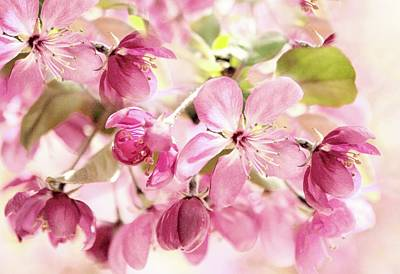 Crabapple Photograph - Blossom Beauty by Jessica Jenney
