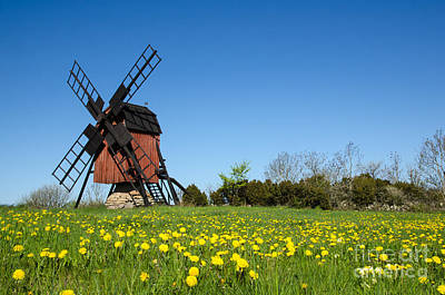 Photograph - Blossom Dandelions By A Traditional Windmill by Kennerth and Birgitta Kullman