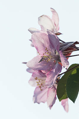 Photograph - Blossom Delight by Penny Meyers