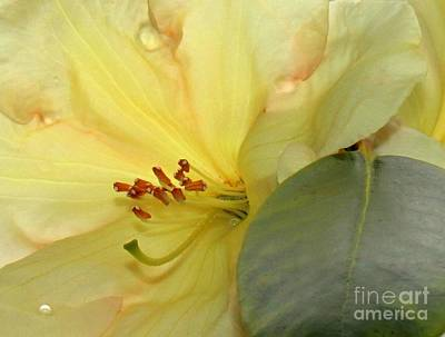 Art Print featuring the photograph Blossom by Erica Hanel
