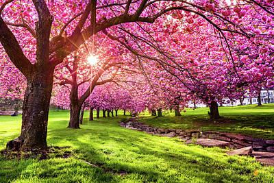 Photograph - Blossom Explosion by Mihai Andritoiu