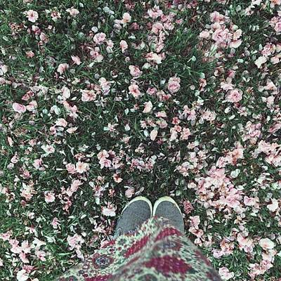 Warwickshire Photograph - #blossom #feetporn #flowers #pretty by Emma Gillett