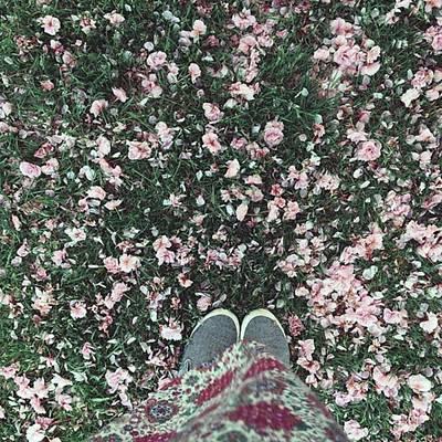 Warwickshire Wall Art - Photograph - #blossom #feetporn #flowers #pretty by Emma Gillett