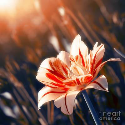 Sun Rays Photograph - Blossom Flower by Konstantin Sevostyanov