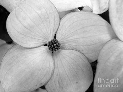 Blossom In Black And White Art Print