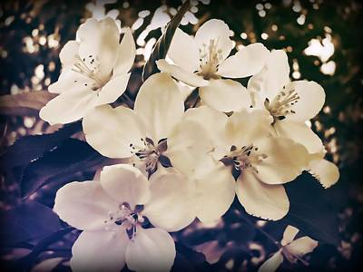 Blossom Art Print by JAMART Photography