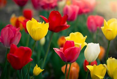 Clemson Photograph - Blossom by Johan Hakansson