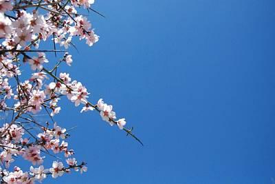 Flower Digital Art - Blossom by Maye Loeser