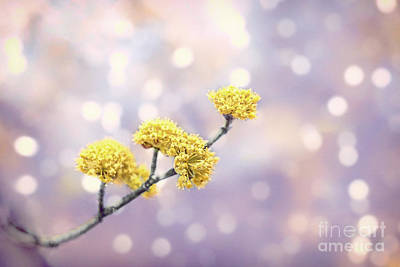 Royalty-Free and Rights-Managed Images - Blossom Melodies by Evelina Kremsdorf
