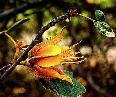 Photograph - Blossom Of Orange by Camille Lopez