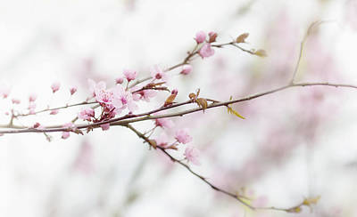 Photograph - Blossom Pink by Rebecca Cozart