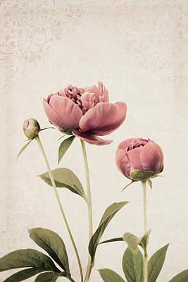 Photograph -  Blossom by Robin-Lee Vieira
