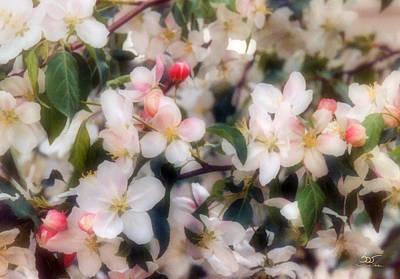 Photograph - Blossom by Sam Davis Johnson