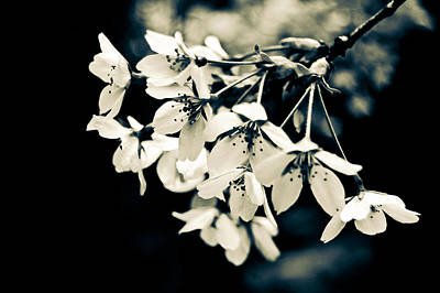 Photograph - Blossom by Stewart Scott
