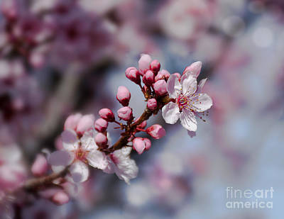 Photograph - Blossom by Susan Warren