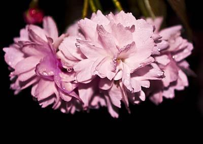 Blossom Art Print by Svetlana Sewell