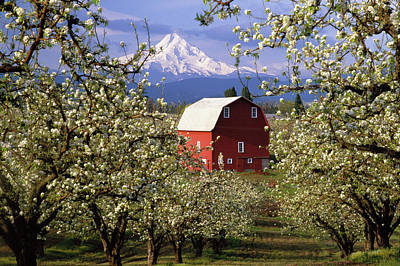 Farm Scenes Photograph - Blossom Time by Eggers Photography