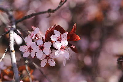 Photograph - Blossom Time by Lynn Hopwood