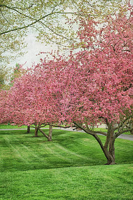 Photograph - Blossom Time Scenes Around A Small Town by Kathi Mirto