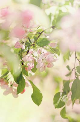 Dappled Light Photograph - Blossom Tree by Margaret Goodwin