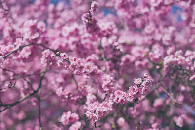 Photograph - Blossoming Buds by Kunal Mehra