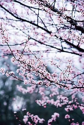 Art Print featuring the photograph Blossoming Buds by Parker Cunningham