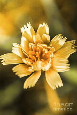 Dandelion Wall Art - Photograph - Blossoming Dandelion Flower by Jorgo Photography - Wall Art Gallery