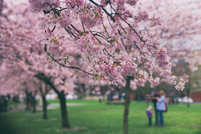 Photograph - Blossoming Family by Kunal Mehra