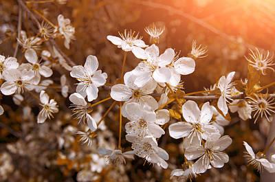 Sun Rays Photograph - Blossoming Garden by Konstantin Sevostyanov
