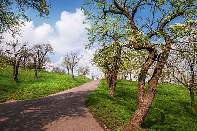 Photograph - Blossoming Orchards At Petrin Hill. Prague by Jenny Rainbow