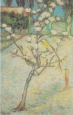 Painting - Blossoming Pear Tree by Joy of Life Art Gallery - Vincent Van Gogh