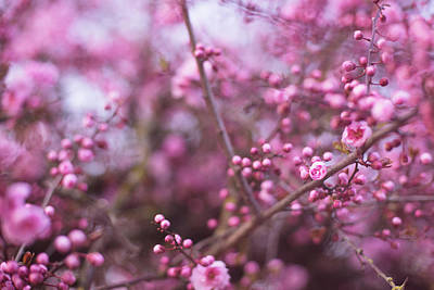Photograph - Blossoming Pink Love by Kunal Mehra