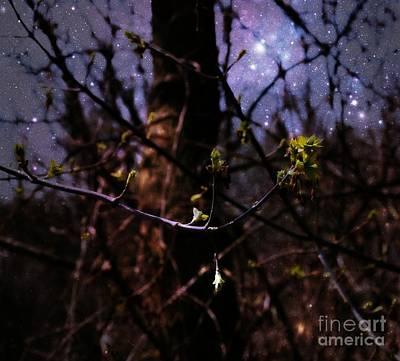 Photograph - Blossoming Stars by Amanda Kessel
