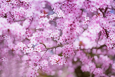 Photograph - Blossoms And Dreams by Kunal Mehra