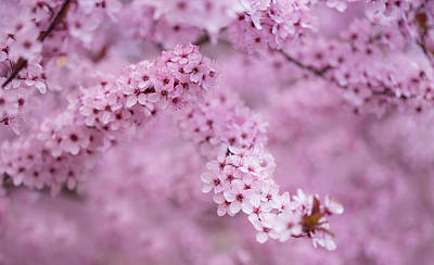 Photograph - Blossoms And Hearts by Kunal Mehra