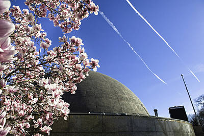 Downtown Boston Photograph - Blossoms by Andrew Kubica