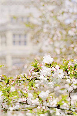 Photograph - Blossoms At Hatley Castle 2 by Margaret Goodwin
