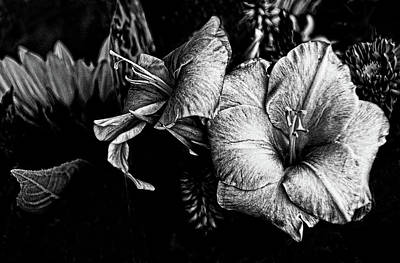 Photograph - Blossoms, Black And White. by Bill Jonscher
