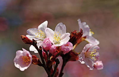 Photograph - Blossoms Bouquet by Debbie Oppermann