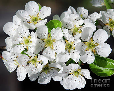 Art Print featuring the photograph Blossoms by Elvira Ladocki