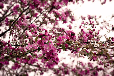 Photograph - Blossoms by Erica Kinsella
