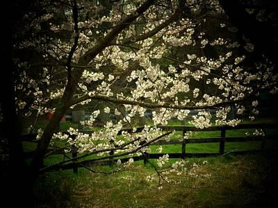 Blossoms Fence Print by Michael L Kimble
