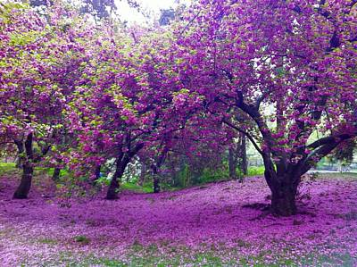 Photograph - Blossoms In Central Park by Cherylene Henderson