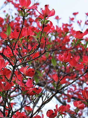 Photograph - Blossoms by Jamie Johnson