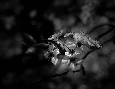 Photograph - Blossoms by Karen Harrison
