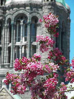 Photograph - Blossoms Of Justice by Georgia Hamlin